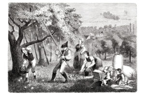 colonial-apple-orchard