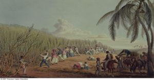 BL11805 Credit: Slaves Fell the Ripe Sugar, Antigua, 1823 (print) by Clark, William (fl.1823) ©British Library, London, UK/ The Bridgeman Art Library Nationality / copyright status: English / out of copyright